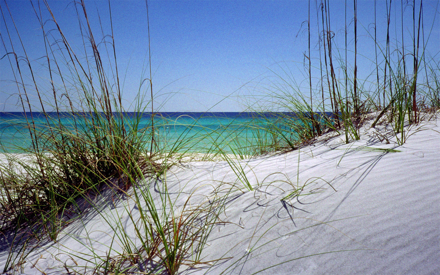 how to grow grass in florida sand